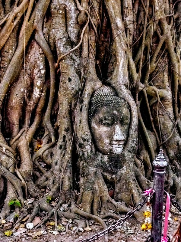 The iconic Buddha in the tree roots