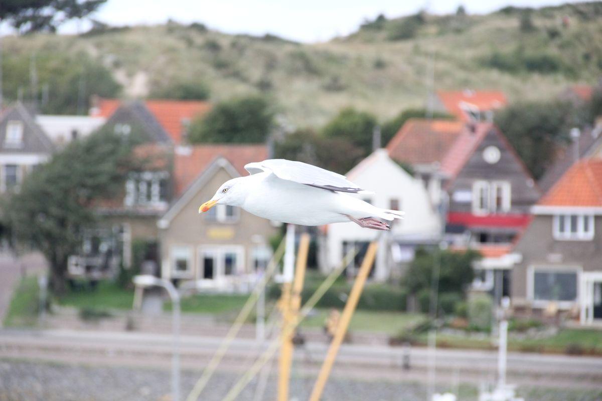 The speedy bird