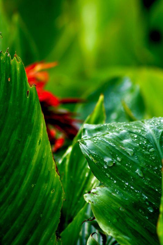 Rain drops close-up effect