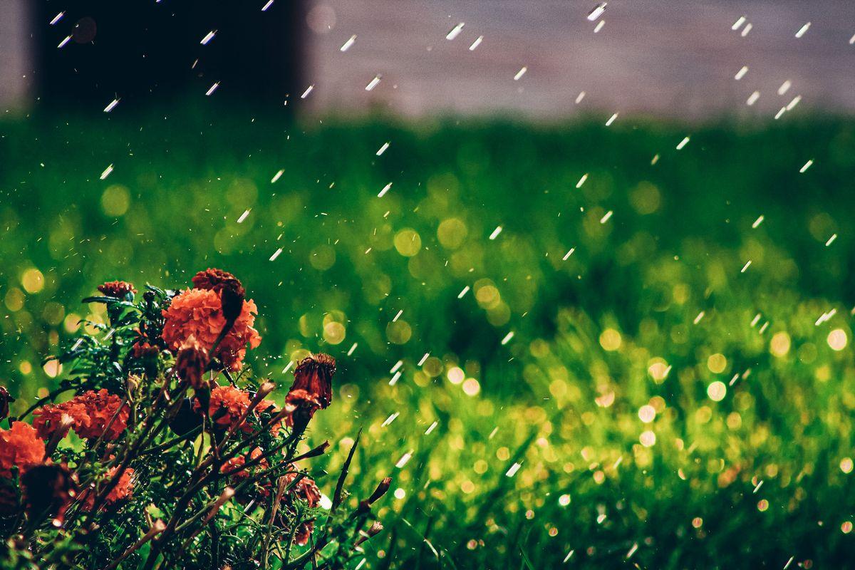 Raining over flowers