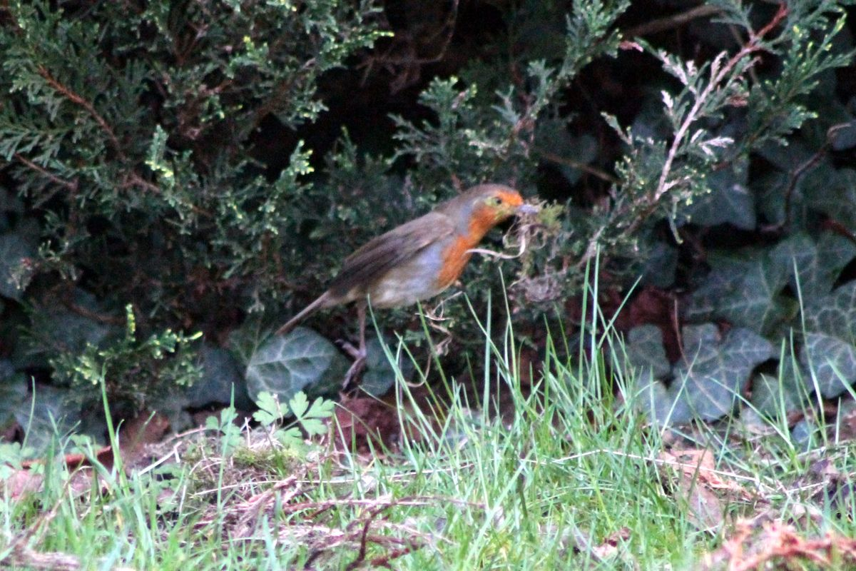 Hoping Robin