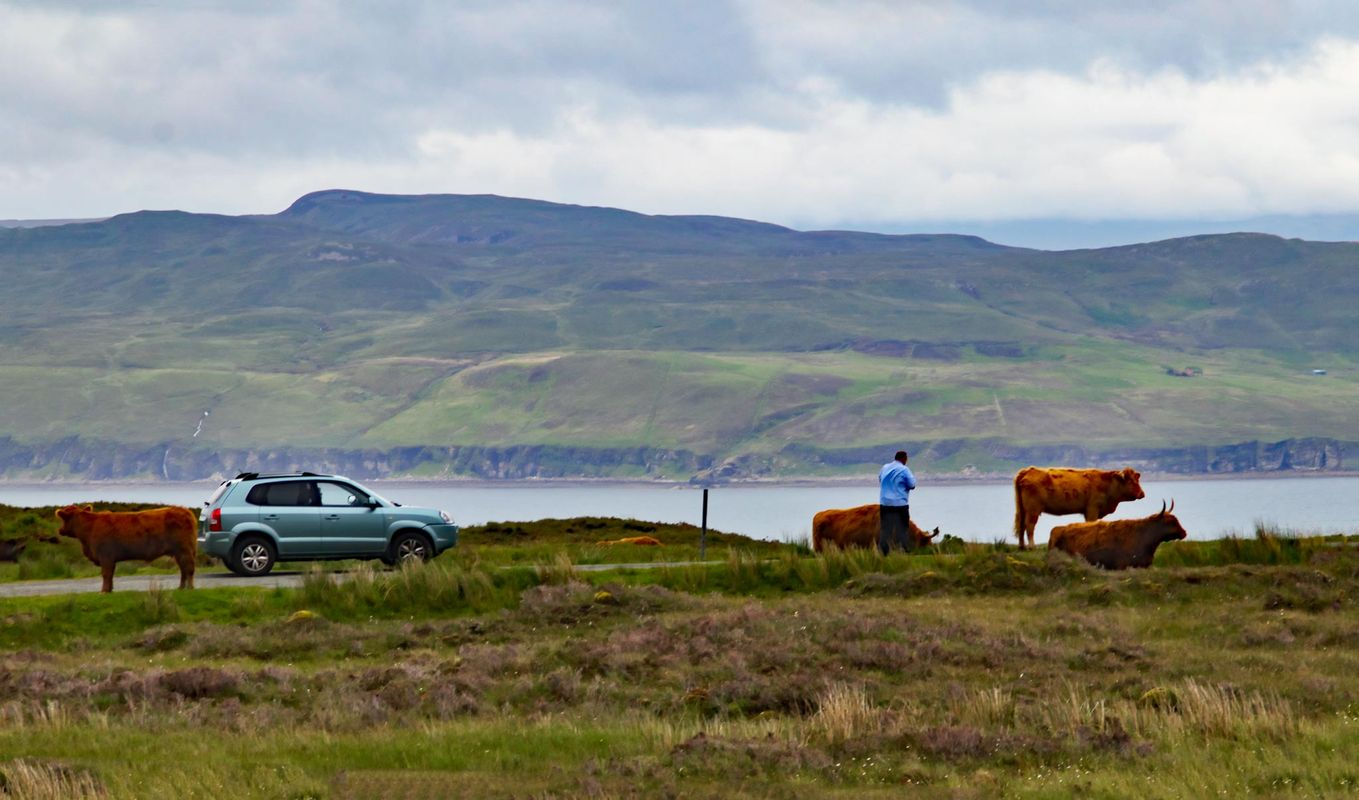 Traffic Jam Scottish Highlands.