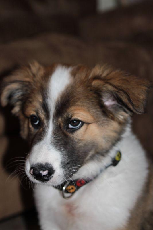 Romeo first year-3
