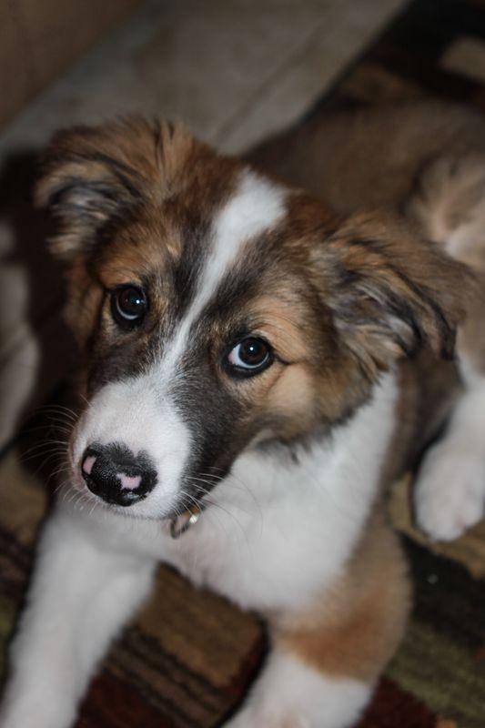 Romeo first year-6