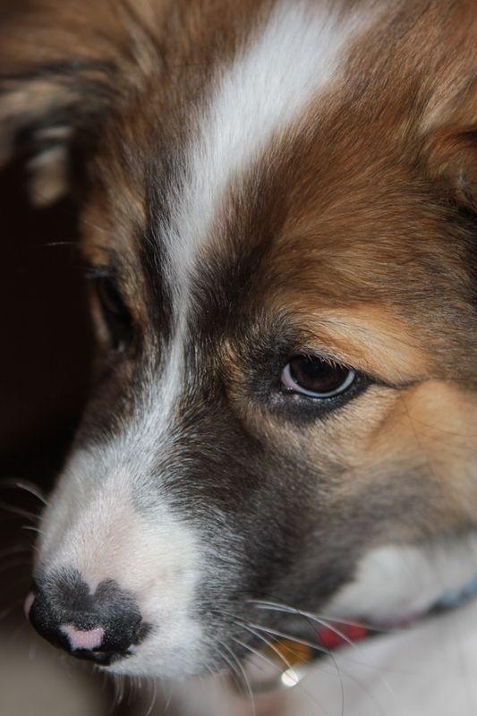 Romeo first year-7