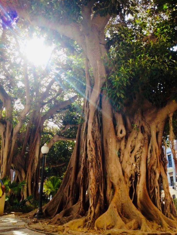 Big Tree Trunks