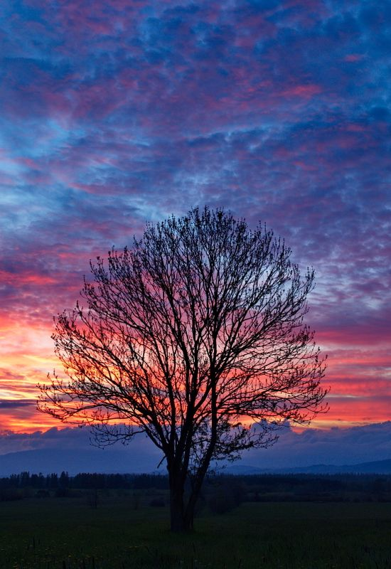 Lonely tree at more dramatic sunset