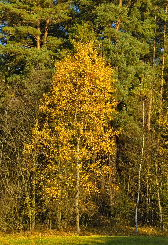 Autumn colours: yellow
