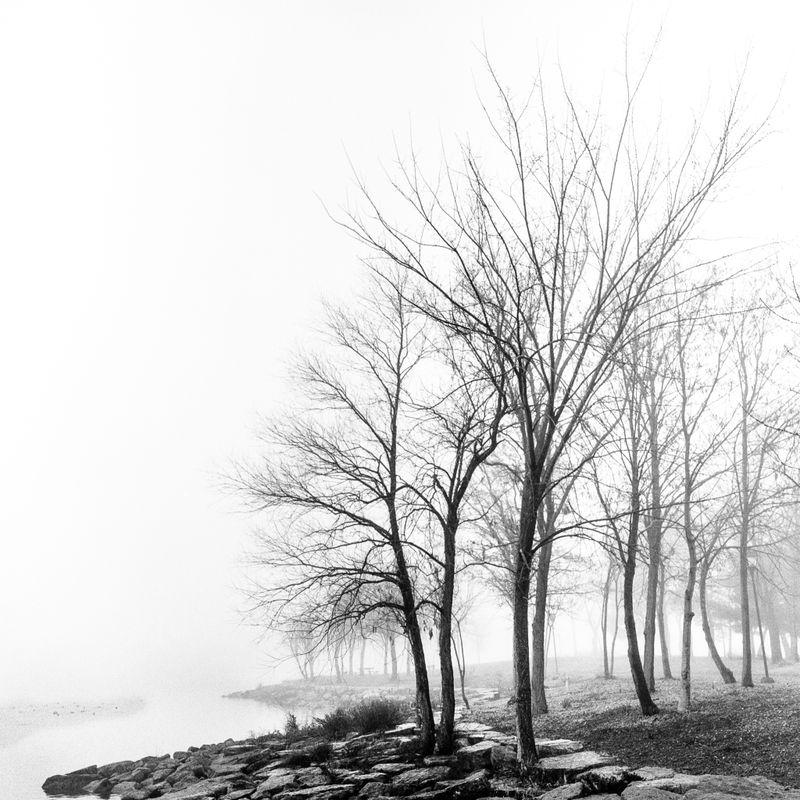 Winter Morning Fog