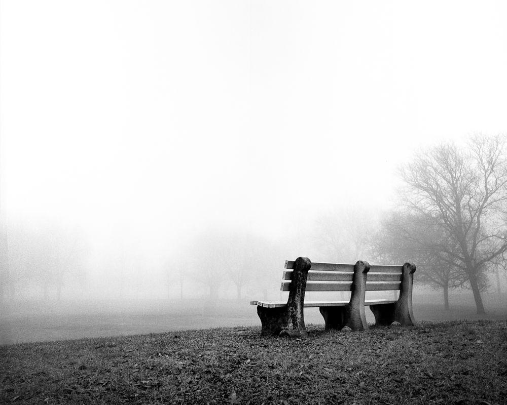 Dundurn Park Bench