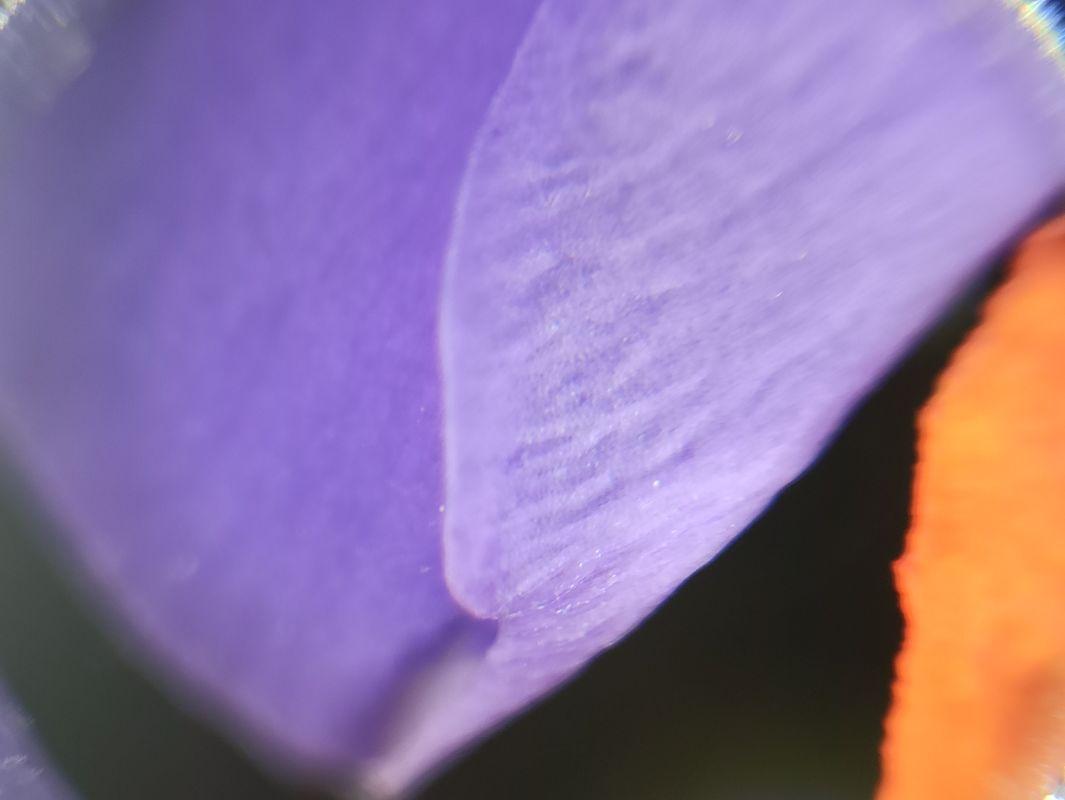 Purple flower petal, macro photography