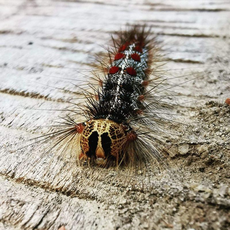 Caterpillar on tree