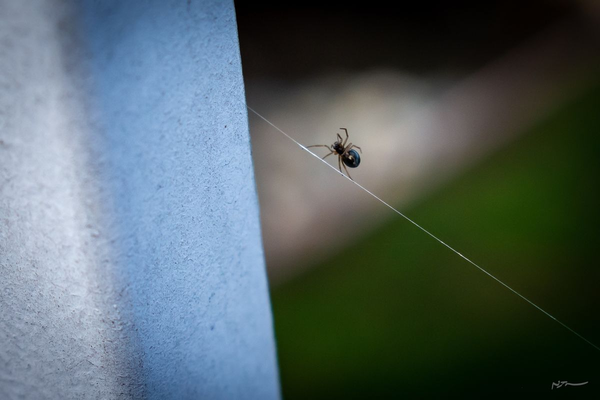 Spider tip-toeing across web