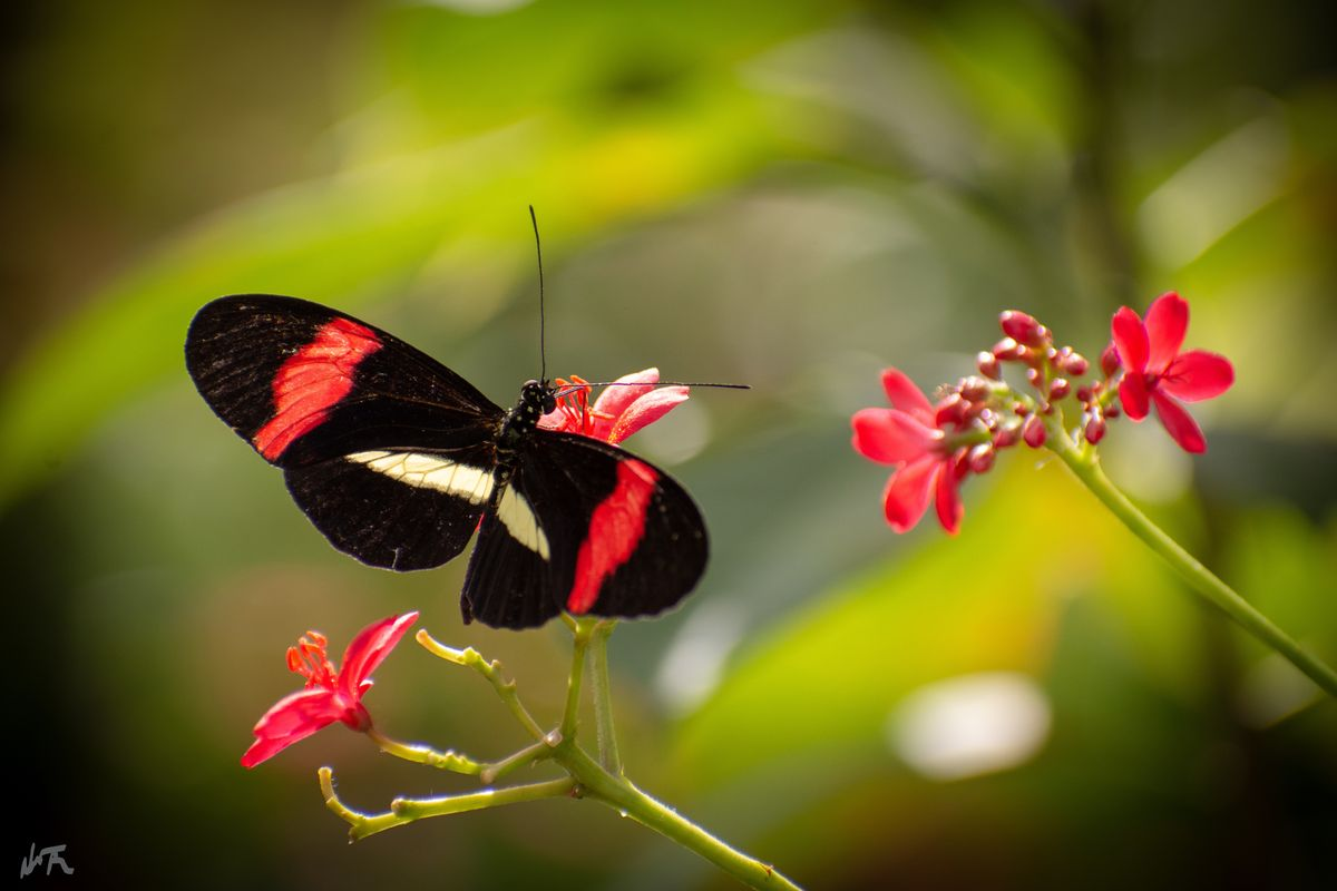 Stunning butterfly on a red flower