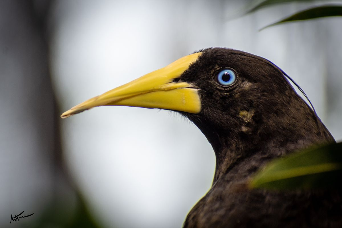 Black bird with beautiful blue eyes