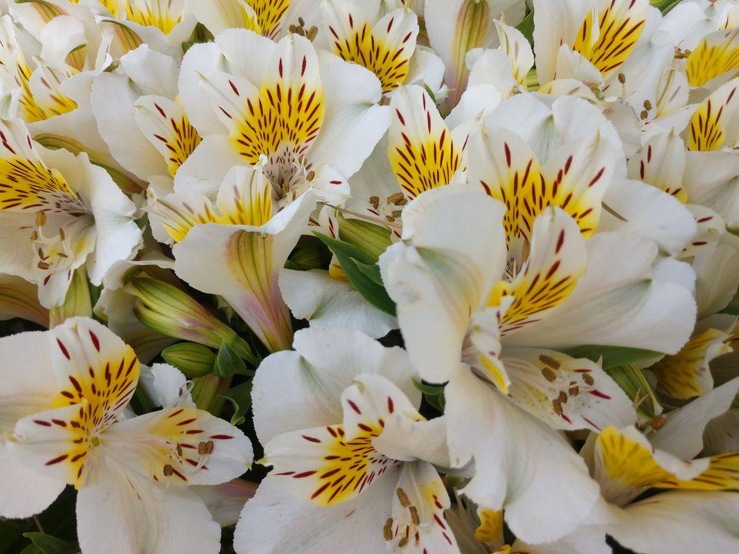 White Yellow Exuberance