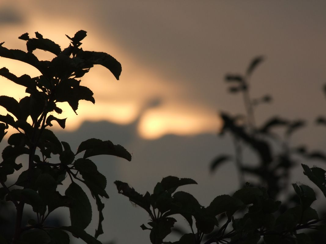 Nessie cloud :)