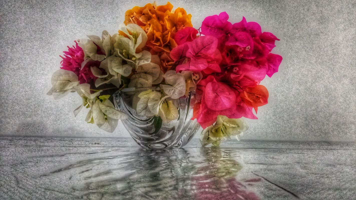 Colors of the flowers