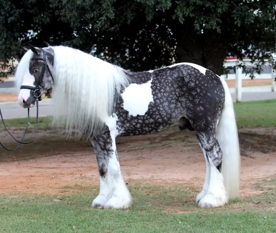 35+ Horses With The Most Beautiful And Unique Colors - They're Like None You've Seen Before