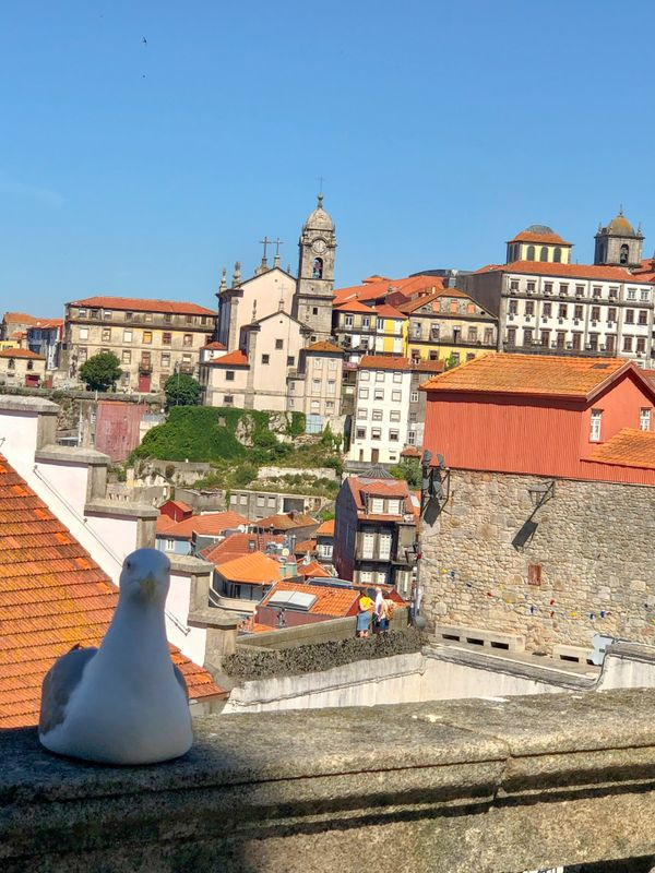The seagull and me !  Old Porto  view Portugal