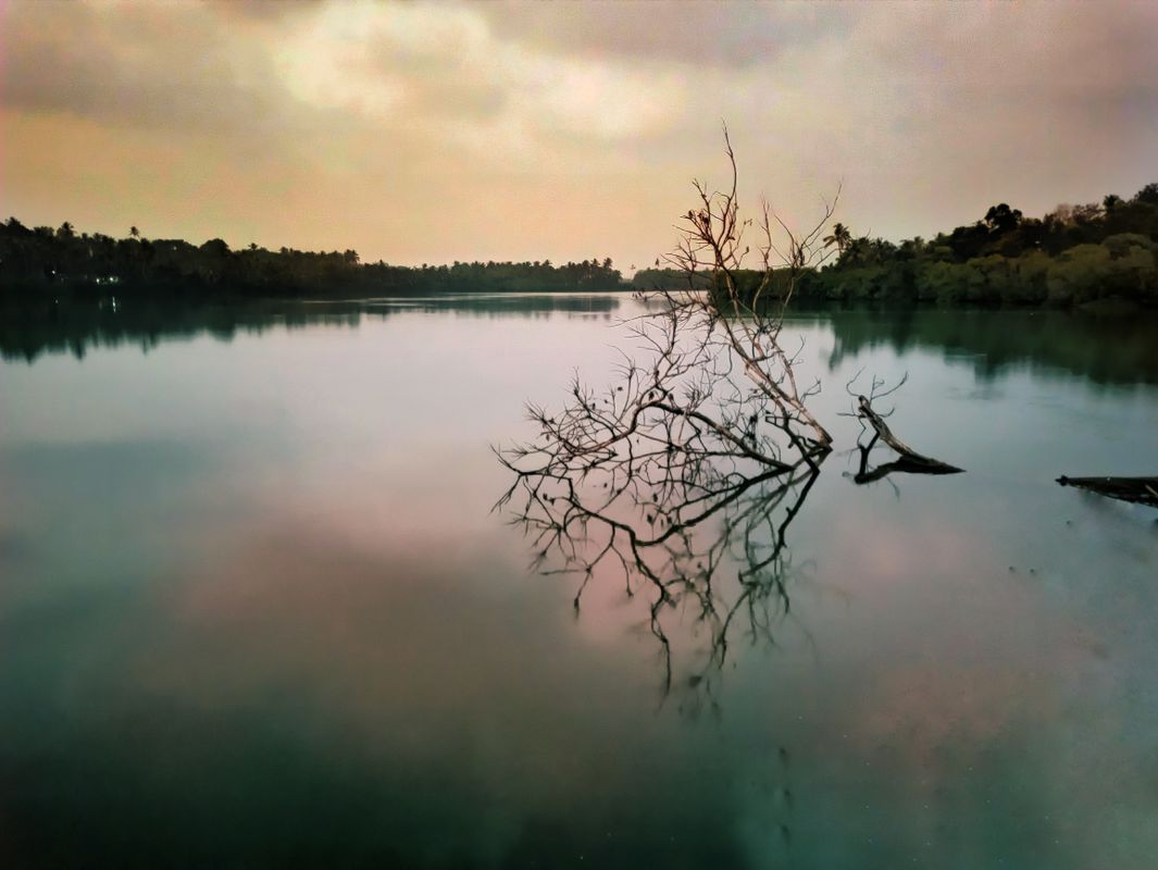 Lonely tree in River
