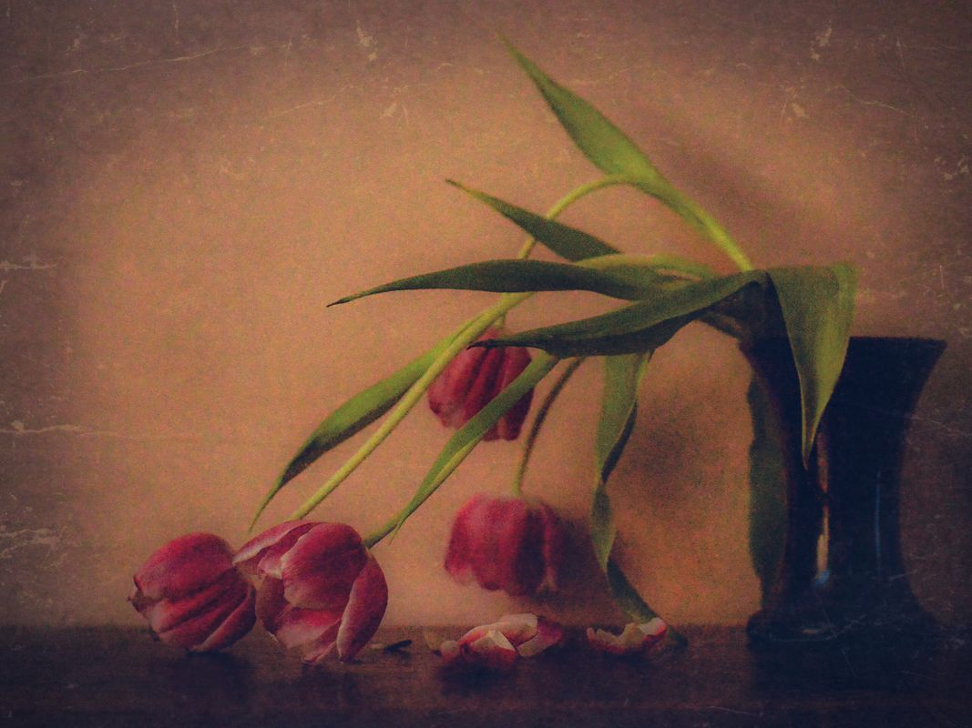 Nothing lasts forever. Abstract tulips