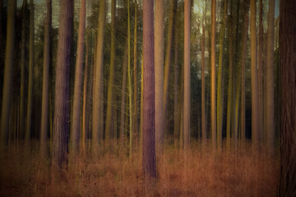 Enchanted forest. Icm trees