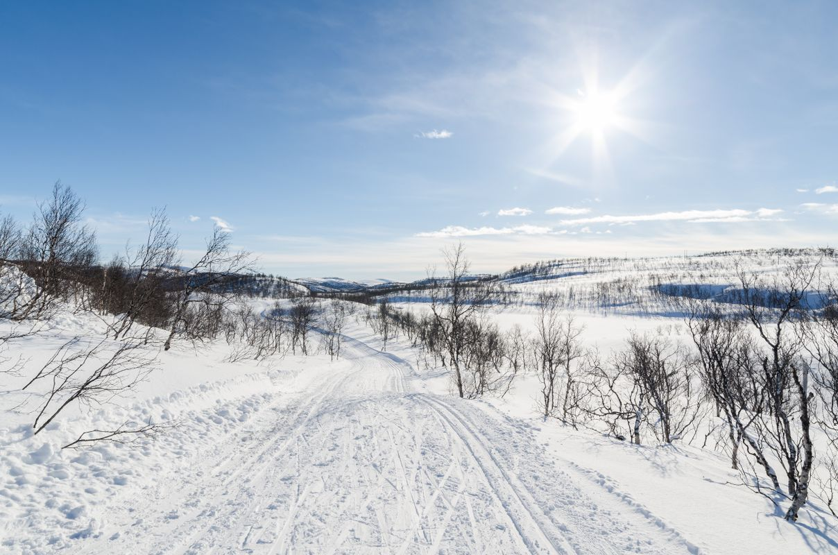 Sunny in the ski trail at mountain