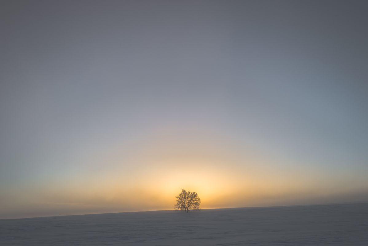 Sun is setting behind a single tree