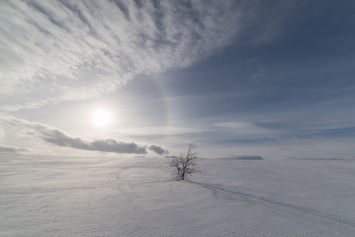 Halo around the sun and a single tree