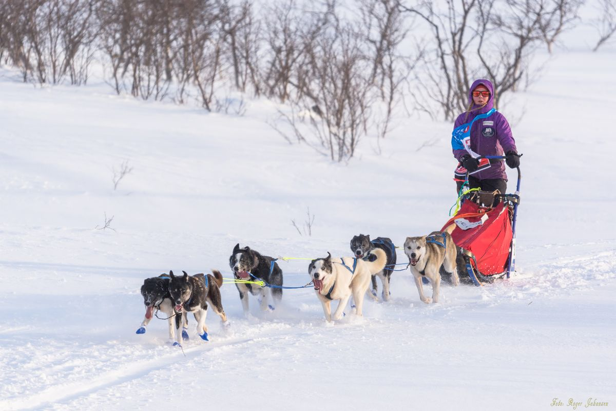 Musher before checkpoint