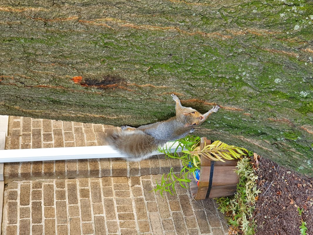 A  SQUIRREL CAUGHT ON CAMERA
