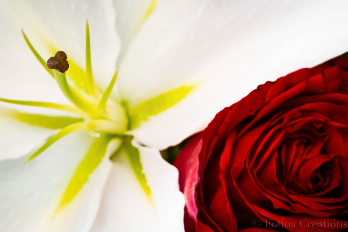 Lily 'n Rose