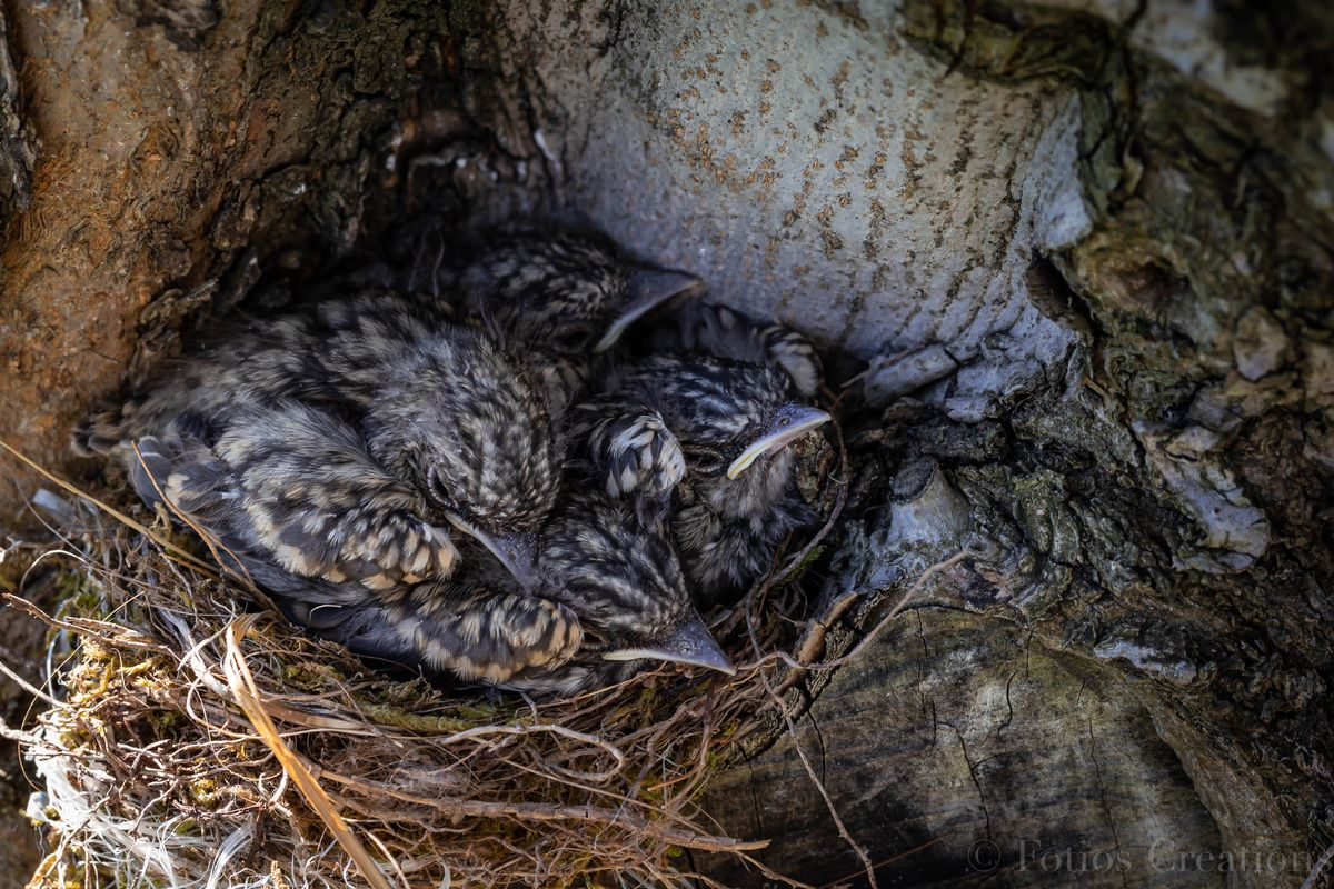 Sparrow nest #2