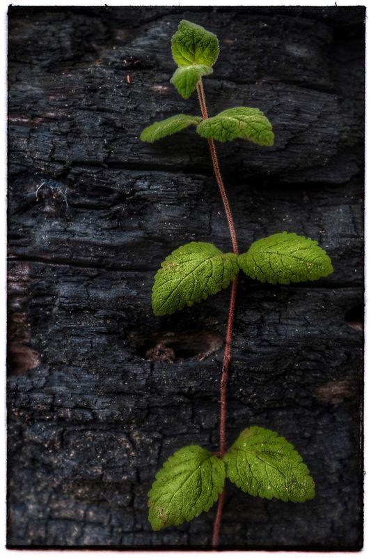 Leaf_Bark_1