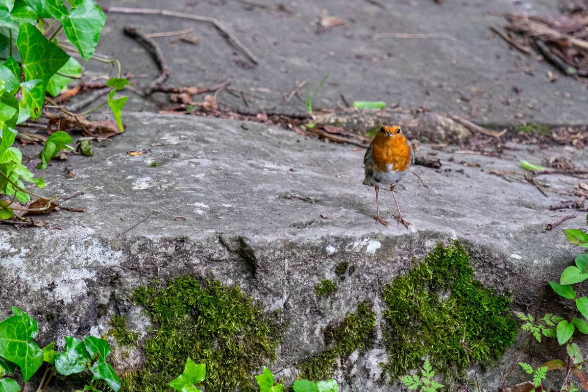 A Robin Rests