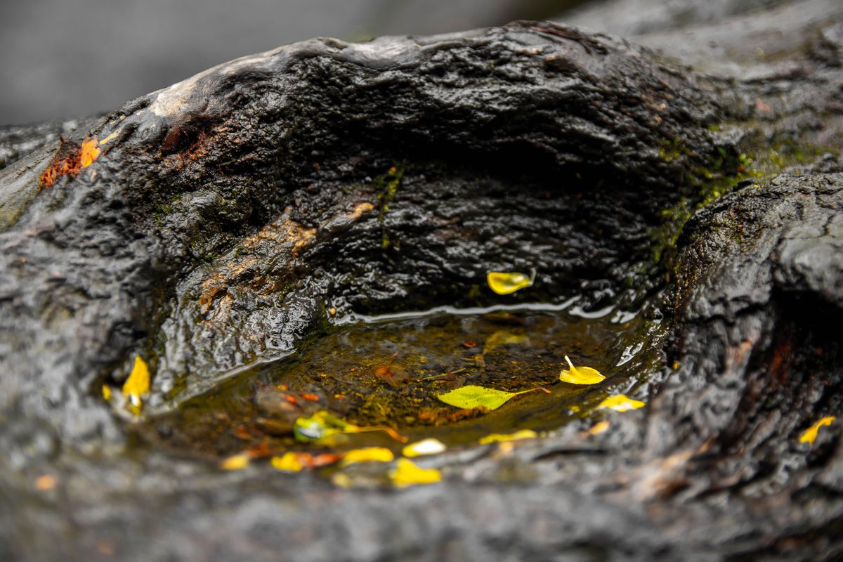 Water on a log