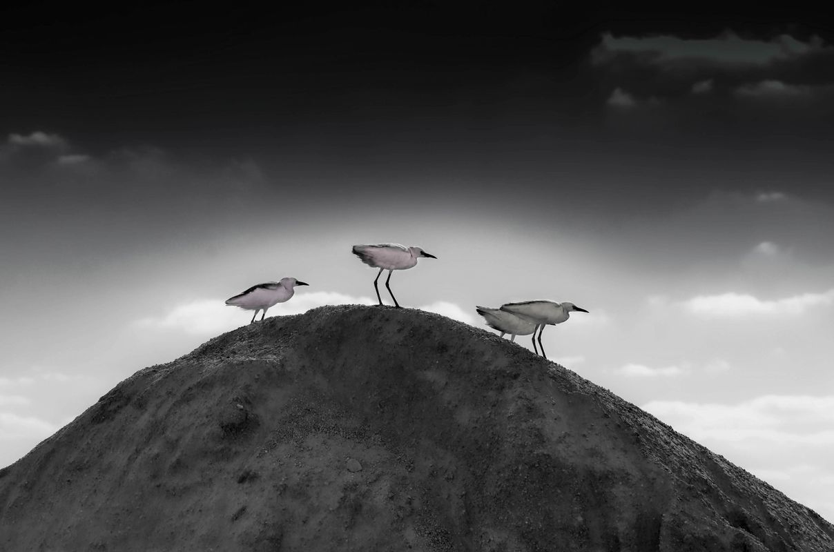 Herons birds hill perched animals.