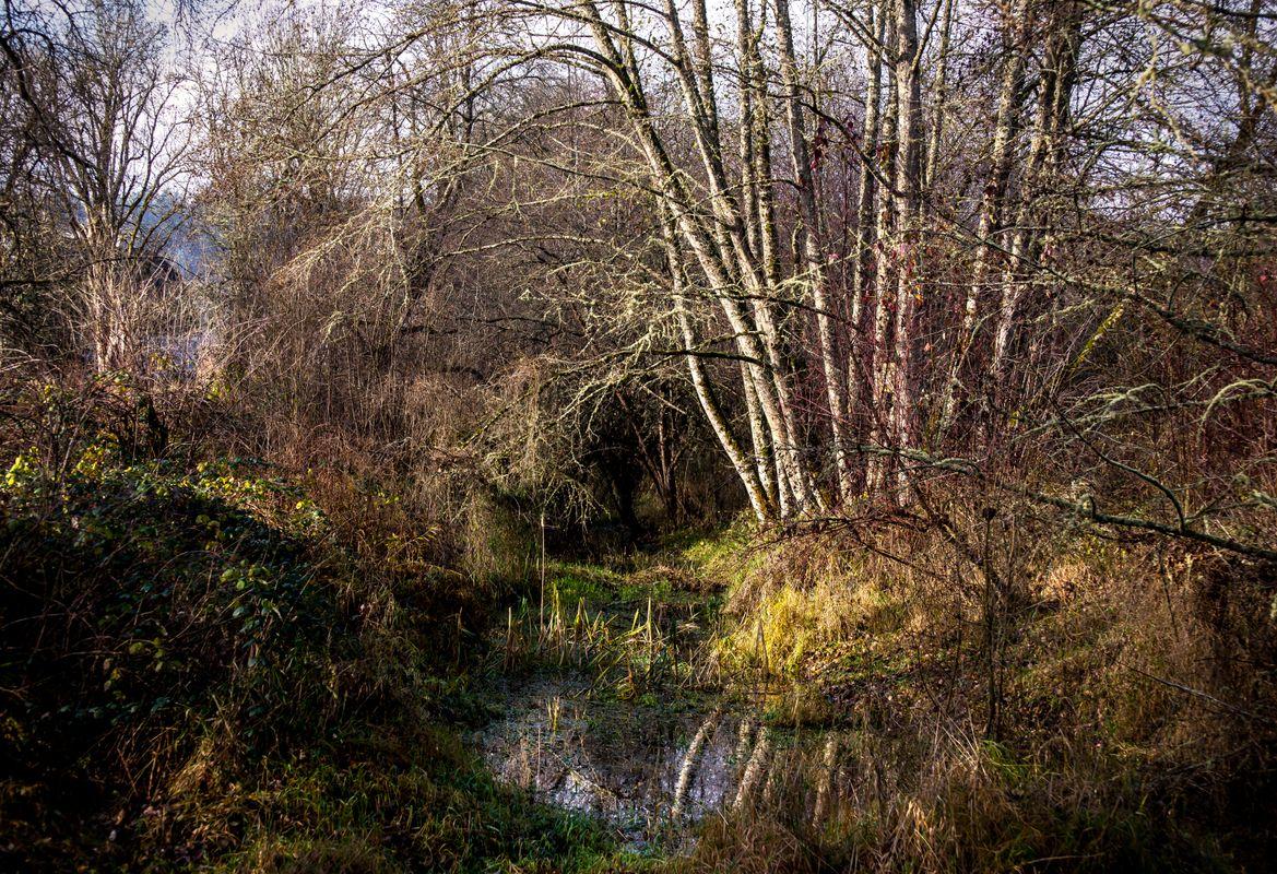 Marsh forest trees swamp wetlands.
