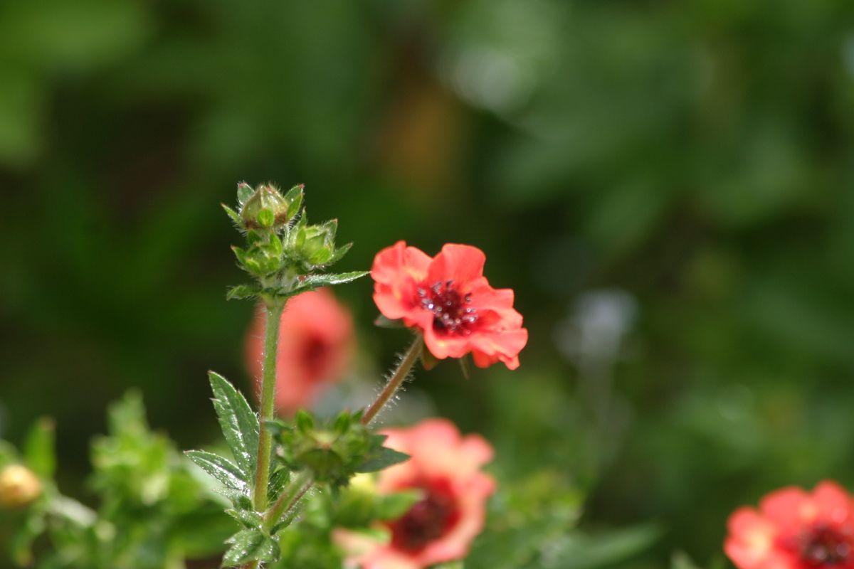 Flowers. Scotland