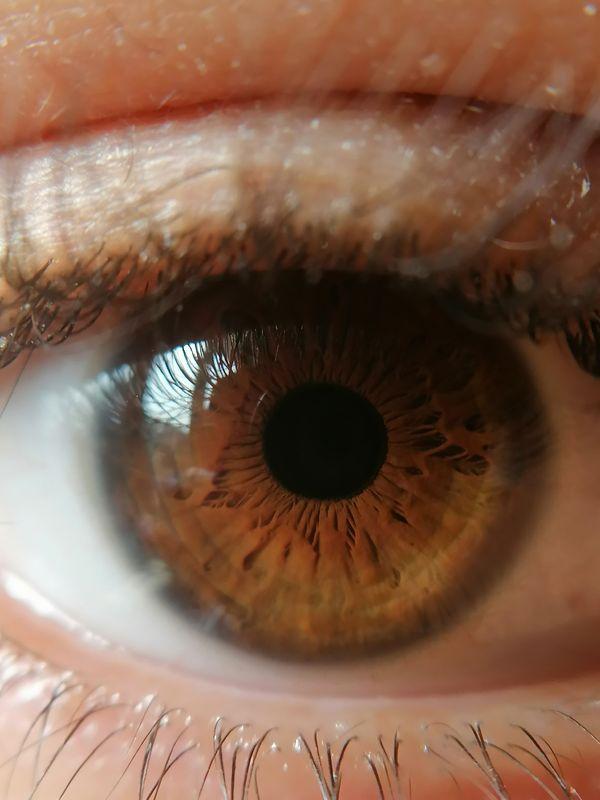 Occhio marrone - macro
