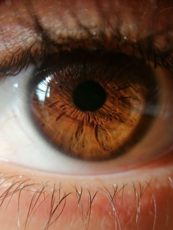 MACRO occhio marrone - foto macro