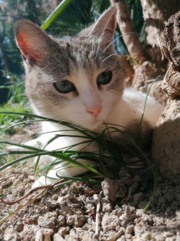 My cat in the garden - Il mio gatto in giardino