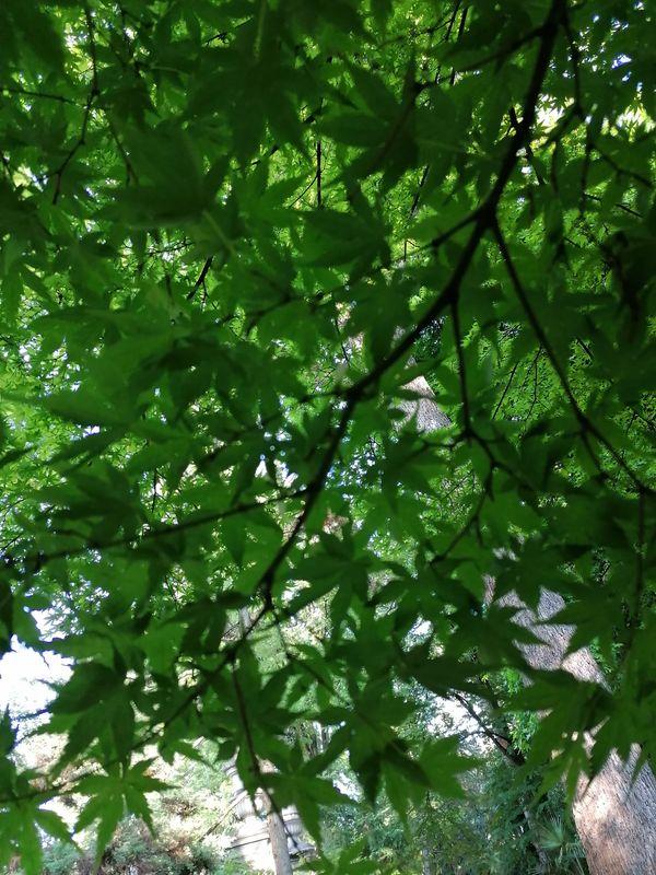Pausa sotto l'albero n.2
