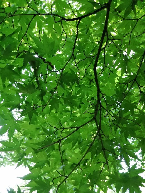 Pausa sotto l'albero