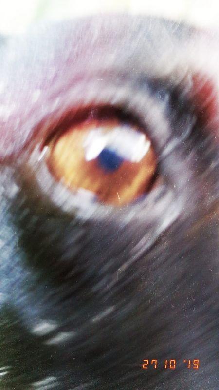 My dog's Caramel eye - L'occhio caramello del mio cane