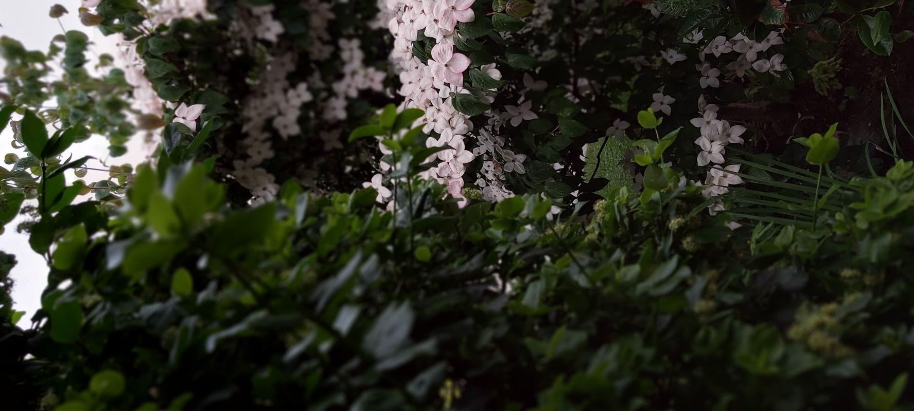 Focused Flowers