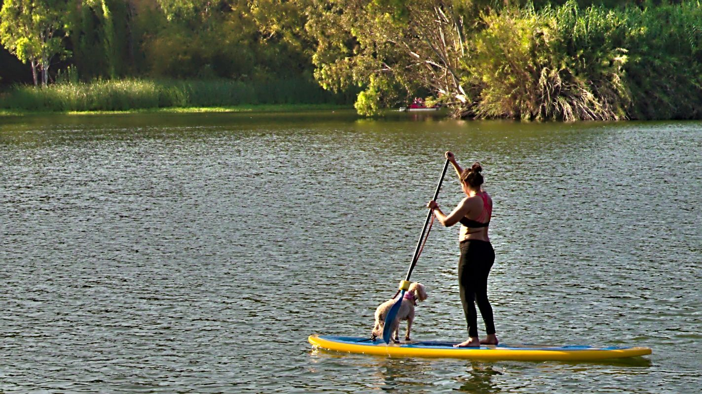 A girl and her dog on paddle board