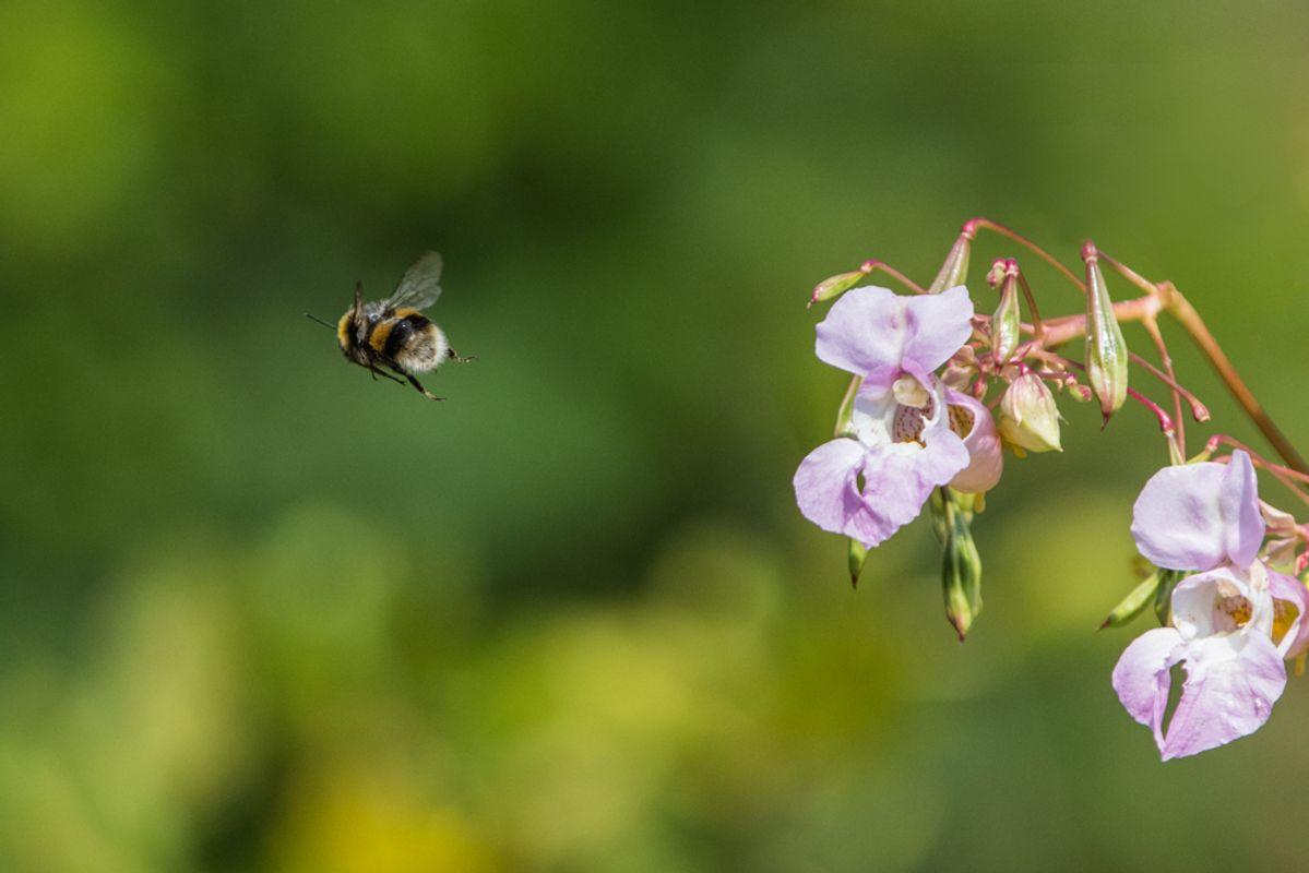 Bee Leaving