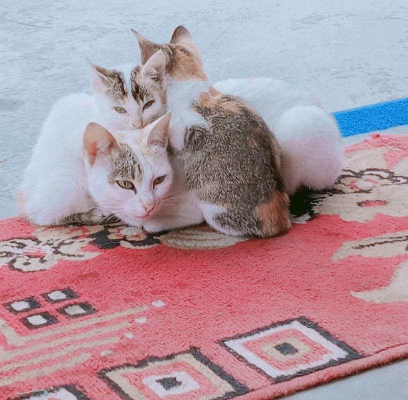 Mom Cat with her cute kitten...
